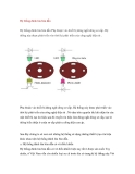 Hệ thống đánh lửa bán dẫn