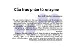 Cấu trúc phân tử enzyme