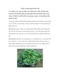 10 loại rau quả giúp hạ huyết áp