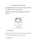 Đặc điểm khuôn mặt sống thọ