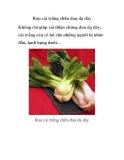 Rau cải trắng chữa đau dạ dày