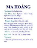 MA HOÀNG