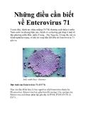 Những điều cần biết về Enterovirus 71