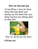 Hoa cúc làm mát gan