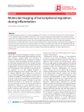 "Báo cáo y học: ""Molecular imaging of transcriptional regulation during inflammationƠ"""