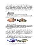 Những loại bệnh thông thường trên cá rô phi và biện pháp phòng trị