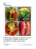 """báo cáo khoa học: """"Parthenocarpic potential in Capsicum annuum L. is enhanced by carpelloid structures and controlled by a single recessive gene"""""""