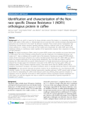 """báo cáo khoa học: """" Identification and characterization of the Nonrace specific Disease Resistance 1 (NDR1) orthologous protein in coffee"""""""