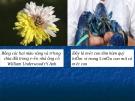 Giáo án điện tử môn sinh học: Sinh học lớp 12- Bài giảng chọn giống vật nuôi cay trồng