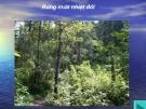 Giáo án điện tử sinh học: Sinh học lớp 12- Rừng mưa nhiệt đới