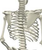 Tái sinh xương