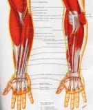Nội soi khớp cổ tay: Nguyên tắc và các ứng dụng lâm sàng
