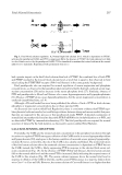 Biochemical, Genetic, and Molecular Interactions in Development - part 8