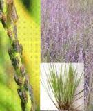 Ứng dụng chỉ thị phân tử trong chọn tạo giống lúa kháng rầy nâu