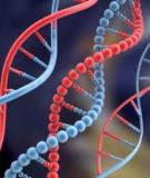 Đề cương Nghiên cứu ứng dụng chỉ thị phân tử DNA để chọn lọc gen tms2 tạo ra các dòng TGMS mới