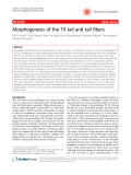 """Báo cáo y học: """" Morphogenesis of the T4 tail and tail fibers"""""""