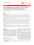 "Báo cáo y học: "" Immunofluorescence Analysis of Duck plague virus gE protein on DPV-infected ducks"""