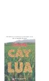 Cẩm nang cây lúa part 1