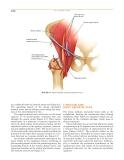 Operative Hip Arthroscopy - part 5