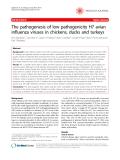 "Báo cáo y học: "" The pathogenesis of low pathogenicity H7 avian influenza viruses in chickens, ducks and turkeys"""