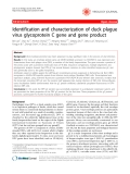 """Báo cáo y học: """"Identification and characterization of duck plague virus glycoprotein C gene and gene product"""""""