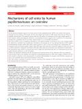 "Báo cáo khoa học: ""Mechanisms of cell entry by human papillomaviruses: an overview"""
