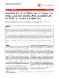 """Báo cáo khoa học: """"Molecular diversity of Cotton leaf curl Gezira virus isolates and their satellite DNAs associated with okra leaf curl disease in Burkina Faso"""""""
