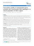"báo cáo khoa học: "" Transcription profiles of mitochondrial genes correlate with mitochondrial DNA haplotypes in a natural population of Silene vulgaris"""