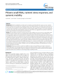 "báo cáo khoa học: "" Phloem small RNAs, nutrient stress responses, and systemic mobility"""