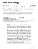 "báo cáo khoa học: "" Gene-based microsatellites for cassava (Manihot esculenta Crantz): prevalence, polymorphisms, and cross-taxa utility"""