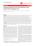 """Báo cáo y học: """"Cloning, expression and characterization of gE protein of Duck plague virus"""""""