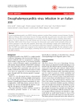 "Báo cáo y học: ""Encephalomyocarditis virus infection in an Italian zoo"""