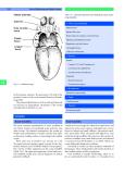 Pediatric ENT - part 4