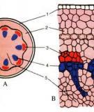 Bài giảng điện tử môn sinh học: Cấu tạo trong của thân non_1