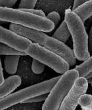 Giáo án điện tử môn sinh học: cây phát sinh động vật