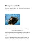 5 thói quen có hại cho tóc