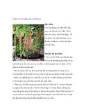 Chăm sóc bón phân cho cây Bonsai