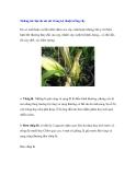Những tác hại do sai sót trong kỹ thuật trồng cây