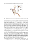 Human Musculoskeletal Biomechanics Part 2