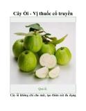 Cây Ổi - Vị thuốc cổ truyền