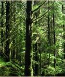 Bệnh cây rừng và các nguyên nhân gây bệnh cây rừng
