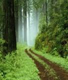 Bài giảng điều tra rừng - Phần 1 - Chương 2