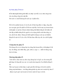 Kỹ thuật ghép rễ Bonsai