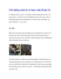 Uốn những cành cây to hoặc cành dễ gãy (3)