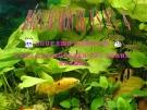 Báo cáo môn thủy sản: Các hình thức nuôi trồng thủy sản