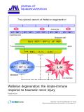 "báo cáo hóa học: "" Wallerian degeneration: the innate-immune response to traumatic nerve injury"""