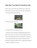 Khắc Phục Vườn Bưởi Da Xanh Bị Suy Kiệt