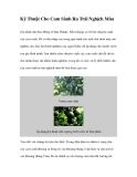 Kỹ Thuật Cho Cam Sành Ra Trái Nghịch Mùa