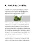 Kinh nghiệm trồng Quýt Hồng