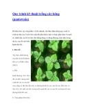 Quy trình kỹ thuật trồng cây hông (paulownia)